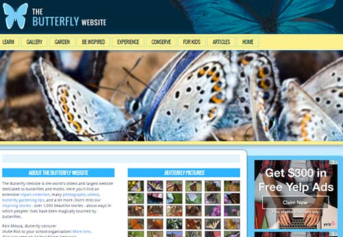 Butterfly Website